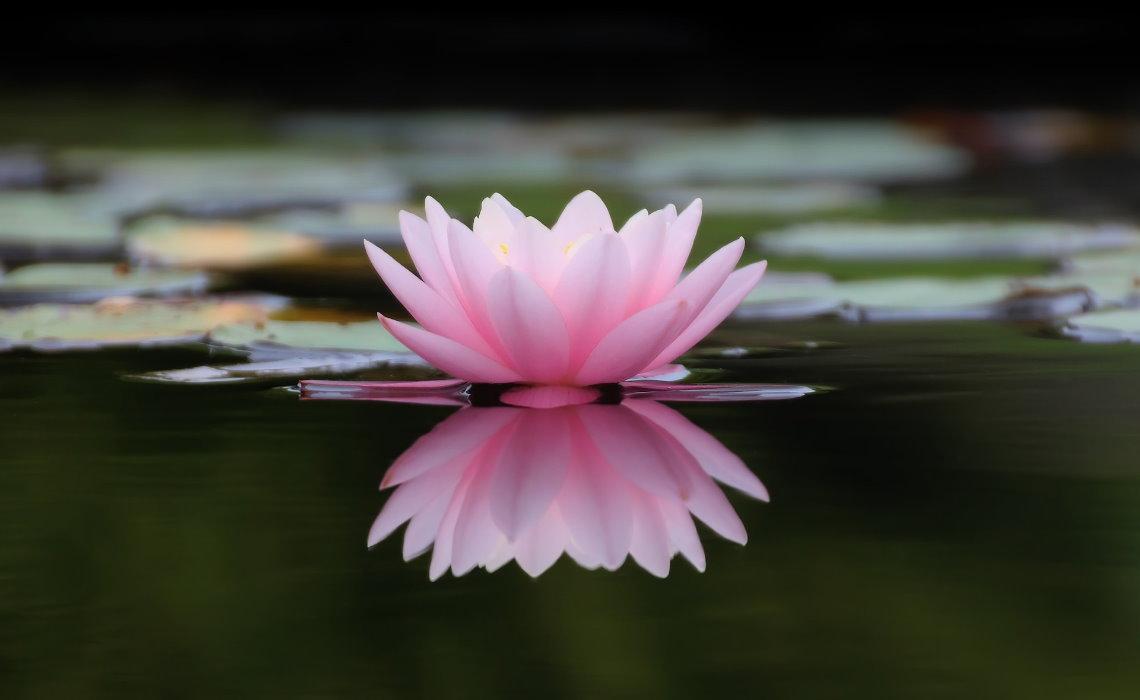 淨琉璃世界七寶莊嚴3-1【認識藥師經.佛陀介紹藥師琉璃光如來】
